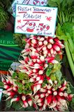 Breakfast radishes for sale. Royalty Free Stock Photos