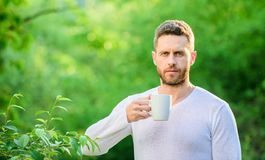 Breakfast refreshment time. drink tea outdoor. morning coffee. healthy lifestyle. nature and health. ecological life for. Man. man in green forest. mature man royalty free stock photography