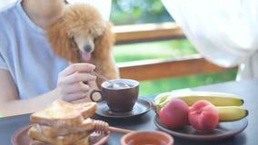 Breakfast woman having morning coffee on terrace. stock video
