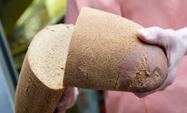 Breaking brown fresh bread Royalty Free Stock Image