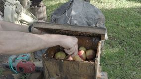Breaking of fresh apples in the grinding box before squeezing. In wooden press to produce cider in village stock footage
