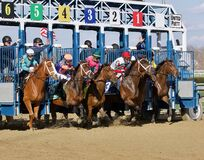 Free Breaking From The Starting Gate At Aqueduct Racetrack Royalty Free Stock Photos - 182196878