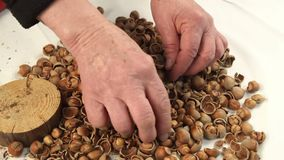 Breaking the hazelnuts with a hammer on the white table