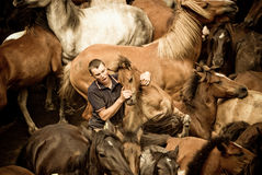 Breaking horses. PONTEVEDRA - AUG 2: A fighter holds a wild horse in a traditional celebration Haircut the beasts on August 2, 2009 in Pontevedra, Spain Stock Photo