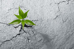 Breaking out. Small plant breaking out from cement ground Royalty Free Stock Photo
