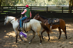 Breaking a race horse to the saddle in florida Royalty Free Stock Photos