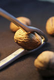 Breaking a walnut with a nutcracker Stock Image