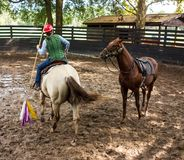Training a young race horse in florida. Breaking a yearling to the saddle as seen at a training facility in ocala Stock Photos
