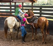 Training a young race horse in florida. Breaking a yearling to the saddle as seen at a training facility in ocala Royalty Free Stock Photography