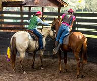 Training a young race horse in florida. Breaking a yearling to the saddle as seen at a training facility in ocala Stock Image