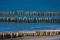 Breakwater. Wellenbrecher on the beach of the Baltic Sea Royalty Free Stock Photo