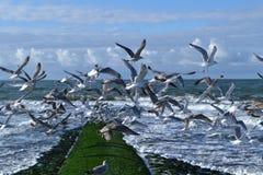 Breakwater in Dutch Northsea with sea gulls Stock Image