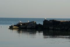 Breakwater with Gulls. Seagulls roost on a breakwater in Lake Erie Royalty Free Stock Photography