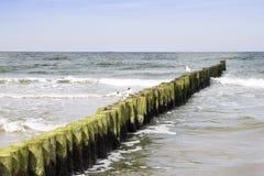 Breakwater seagull Baltic Sea Royalty Free Stock Photos