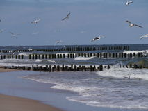 Breakwater and seagulls Royalty Free Stock Photos