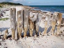 Breakwaters on the beach Funen Denmark Stock Photo