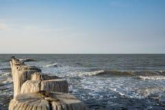 Breakwaters in the North Sea, Cadzand Bad, Holland. Space for text. Row breakwaters on the North Sea beach, Cadzand Bad, The Netherlands. Sunny day and blue sky royalty free stock photos