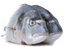 bream θάλασσα ψαριών Στοκ Εικόνα
