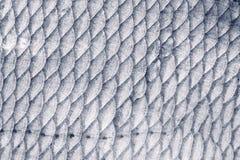 Bream κλίμακες ψαριών, που τονίζονται Στοκ εικόνες με δικαίωμα ελεύθερης χρήσης