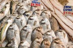bream φρέσκια θάλασσα πολλών &kapp Στοκ Εικόνες