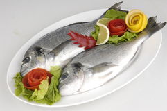 bream ψάρια Στοκ εικόνα με δικαίωμα ελεύθερης χρήσης