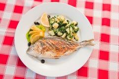 Bream ψάρια Στοκ φωτογραφίες με δικαίωμα ελεύθερης χρήσης