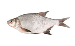 Bream Royalty Free Stock Photo