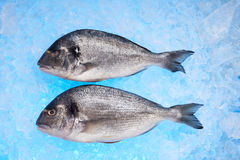 Bream Royalty Free Stock Photos