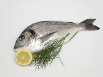 Bream. Accompanied by dill and lemon Stock Image
