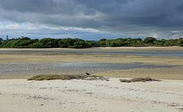 Ruakaka River mouth and oystercatcher. On Bream Bay in Ruakaka , New Zealand Royalty Free Stock Photography