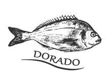 Bream black and white. Hand drawn bream fish. Dorado fish. Vector illustration Royalty Free Stock Photos