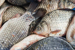 Bream close-up Royalty Free Stock Photography