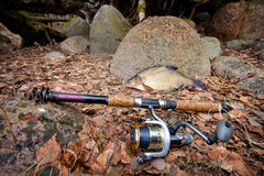Bream from the far lake Stock Photography