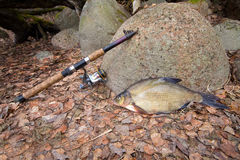 Bream from the far lake Stock Photo