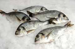 Bream fish Royalty Free Stock Image