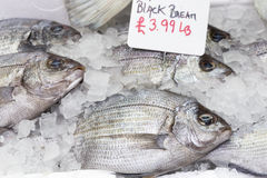 Bream fish on display. Whole black bream fish on ice royalty free stock photos