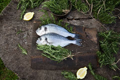 Bream fish. Healthy eating. Bream fish preparation. Seafood with rosemary, salt and fish Royalty Free Stock Photo