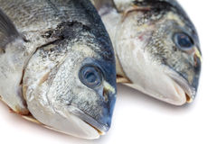 Bream fish isolated Stock Photography
