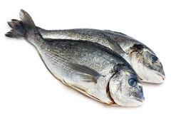 Bream fish isolated Stock Photos