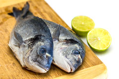 Bream fish with lime isolated Stock Image