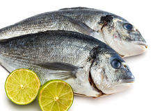 Bream fish with lime isolated Royalty Free Stock Photos
