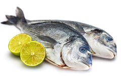 Bream fish with lime isolated Royalty Free Stock Photography