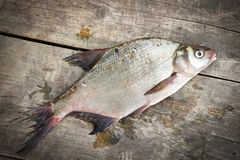 Bream fish on the woods Stock Images