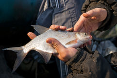 Bream in fisherman's hand Royalty Free Stock Photos