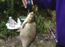 Bream fishing weighing fish Libra. Bream fishing weighing fish Libra Stock Images