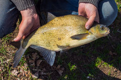 Bream in the hands of men stock photography