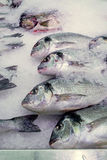 Bream on ice. In supermarket Royalty Free Stock Photo