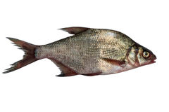 Bream isolated on white background Royalty Free Stock Photography