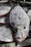 Bream pile Stock Images