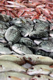 Bream pile Royalty Free Stock Photography